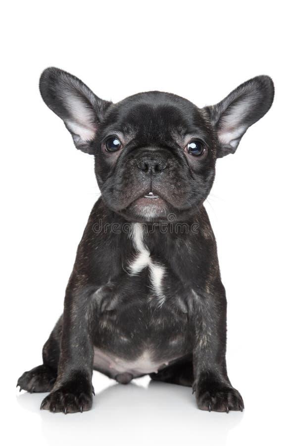 O filhote de cachorro do buldogue francês senta-se em um fundo branco fotos de stock royalty free