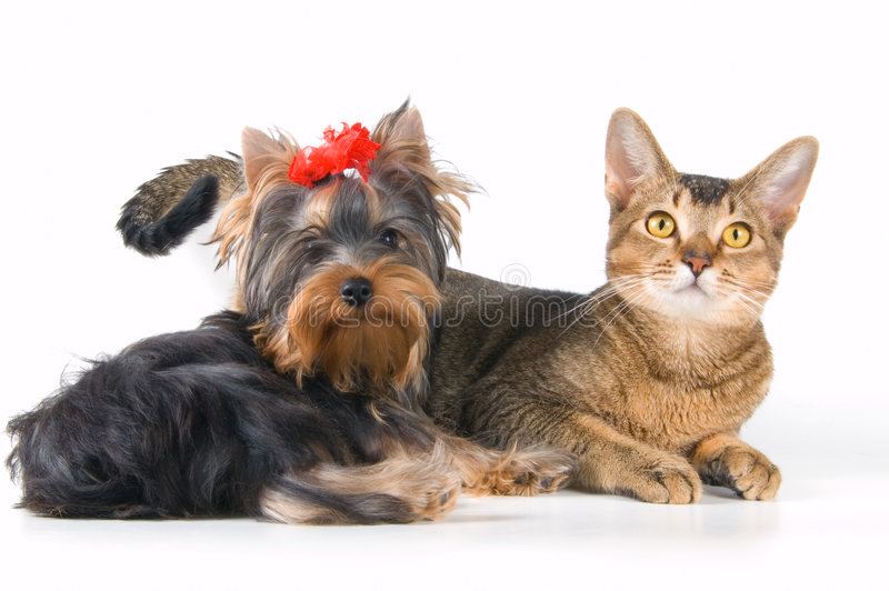 O filhote de cachorro e o gatinho imagem de stock