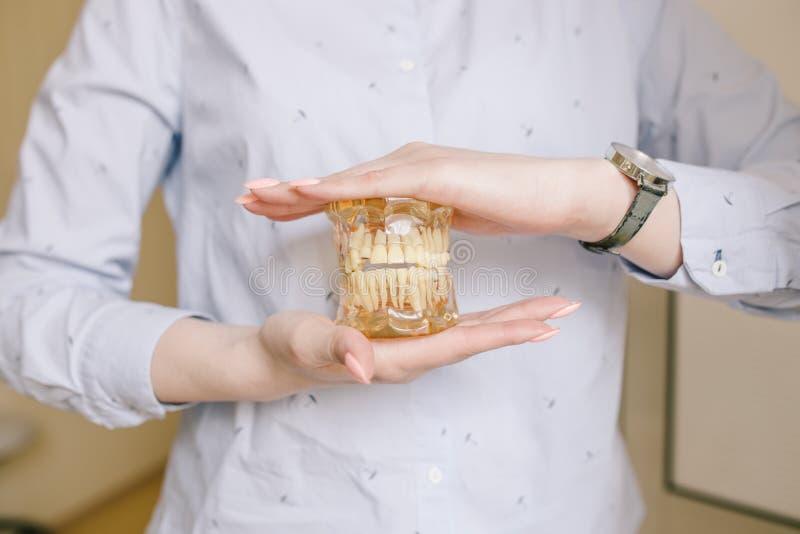 O fim acima da foto da dentadura modelo dos dentes está nas mãos do doutor Os controles regulares são essenciais à saúde oral foto de stock royalty free