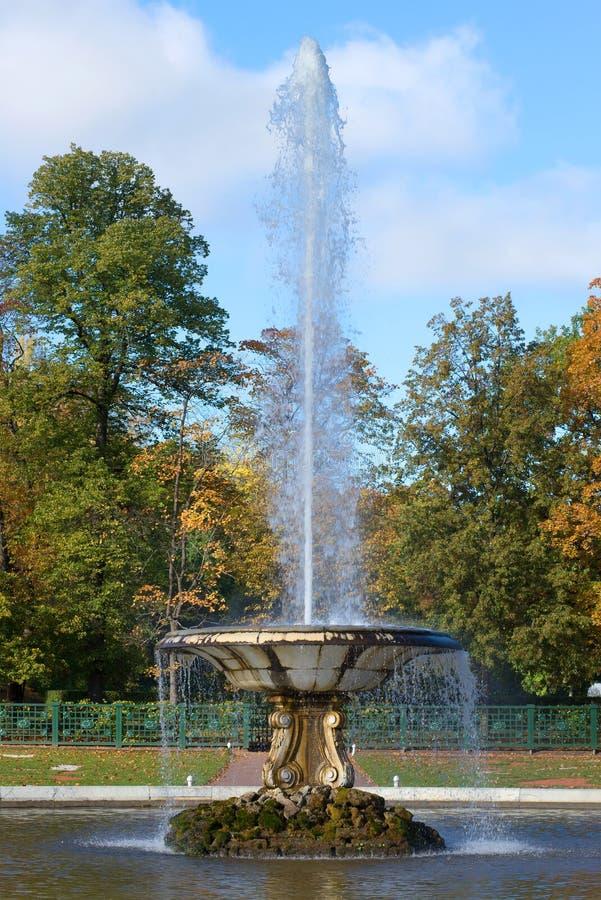 O fim da fonte da bacia acima na tarde ensolarada de outubro no parque do palácio de Peterhof imagem de stock