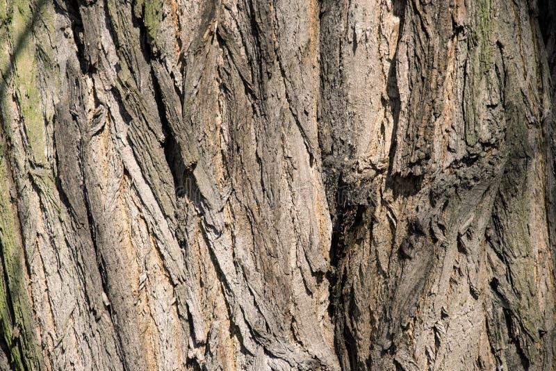 O fim da textura da árvore de casca acima da foto com pele da árvore racha-se imagens de stock royalty free