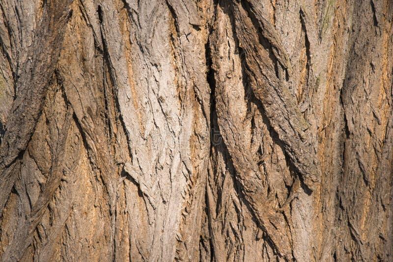 O fim da textura da árvore de casca acima da foto com pele da árvore racha-se fotos de stock