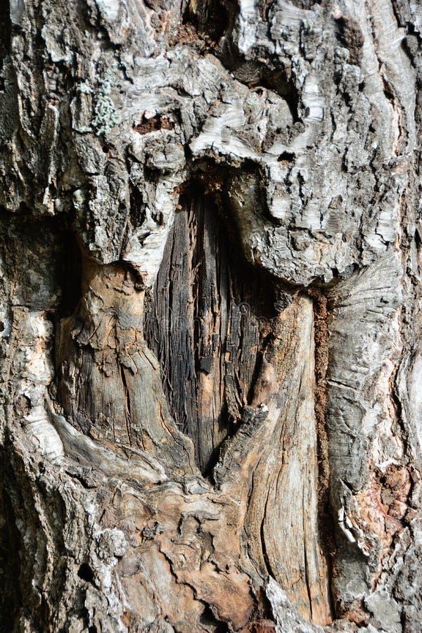 O fim danificado velho do tronco do vidoeiro acima fotografia de stock royalty free