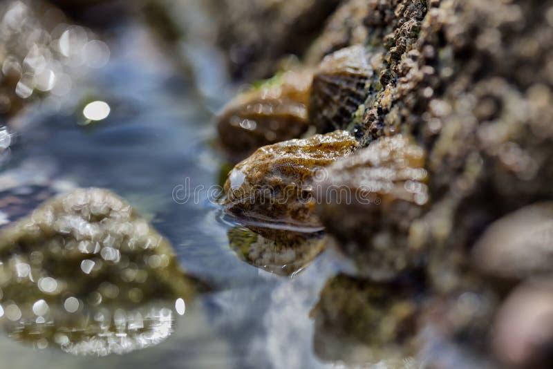 O fim disparou acima sobre algumas conchas do mar pequenas em uma rocha na maré baixa i foto de stock royalty free