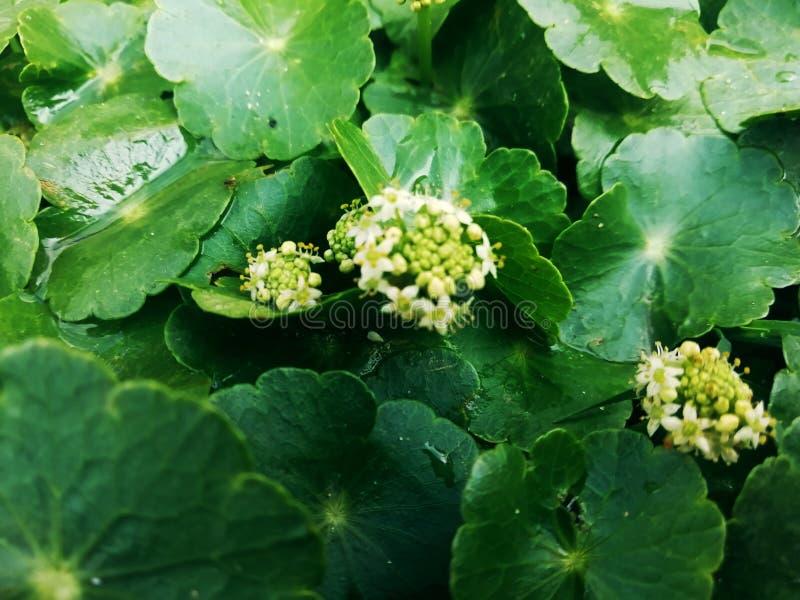O fim fresco verde macro da erva daninha acima das flores deixa árvores das plantas da flor da folha foto de stock