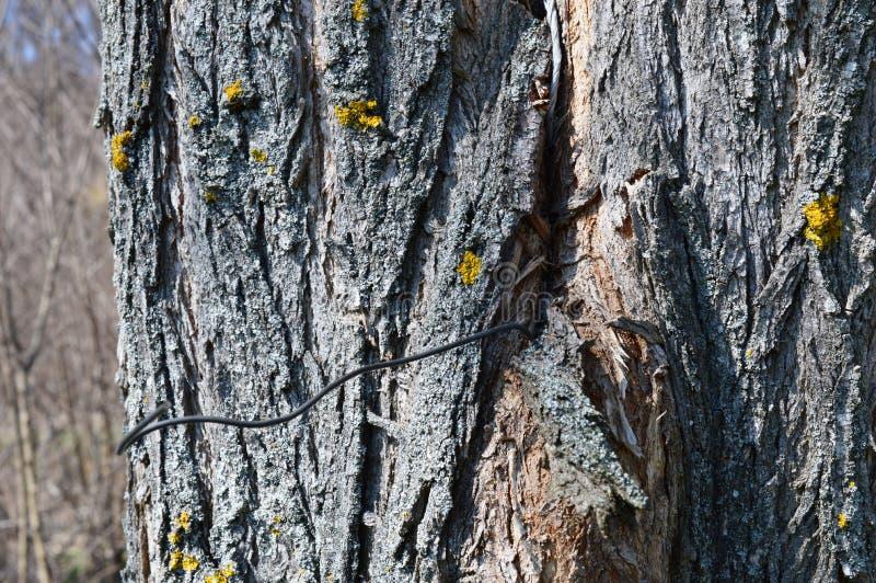 o fio cresceu na árvore fotografia de stock royalty free