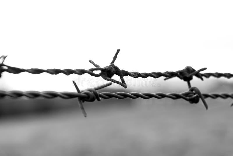 O fio de aço com DES dos espinhos fecha-se acima em preto e branco fotografia de stock royalty free