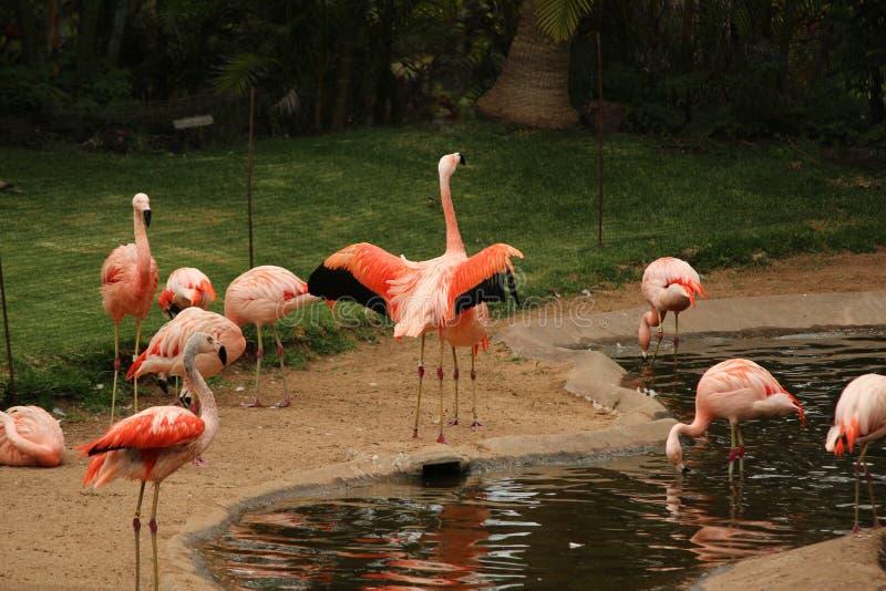 O flapping do flamingo voa a paisagem imagem de stock royalty free