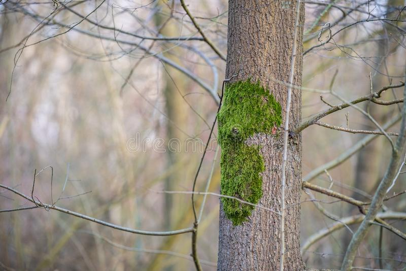 O foco principal está em árvores em situações diferentes imagens de stock royalty free