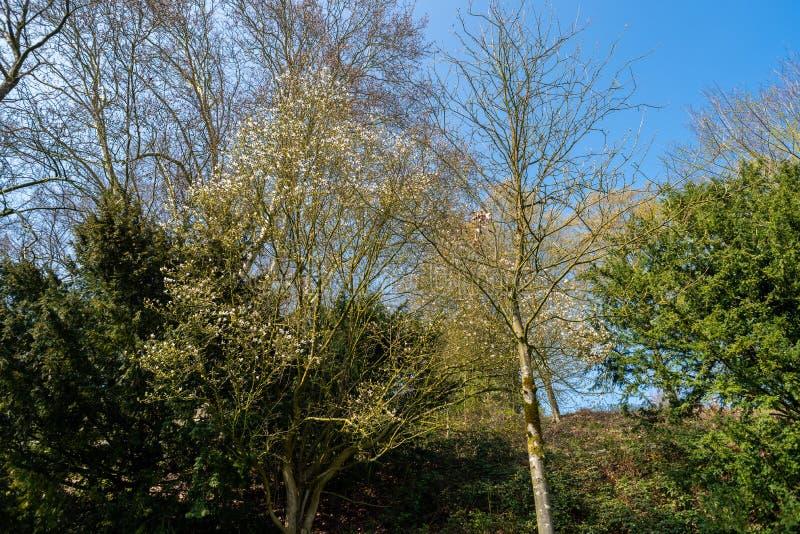 O foco principal está em árvores em situações diferentes fotografia de stock royalty free
