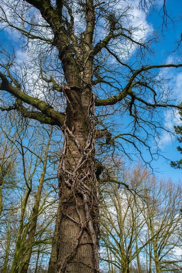 O foco principal está em árvores em situações diferentes foto de stock royalty free