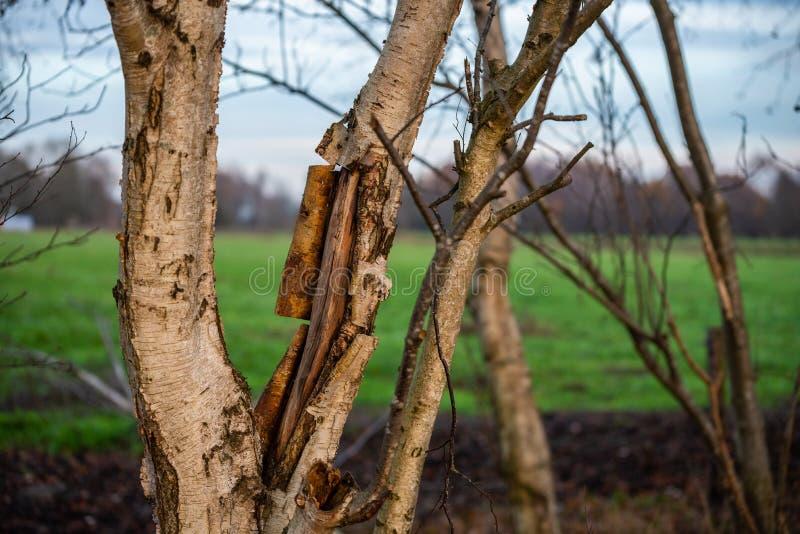 O foco principal está em árvores em situações diferentes fotos de stock royalty free
