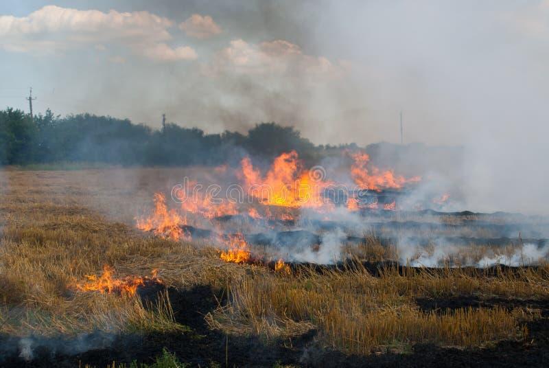 O fogo em um campo de trigo imagens de stock