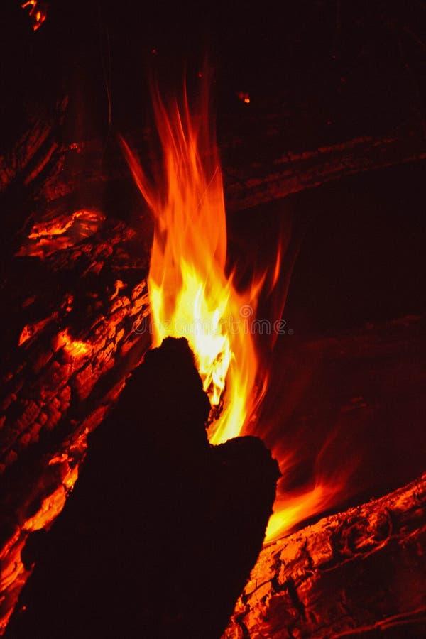 O fogo na floresta, fogueira fotografia de stock royalty free