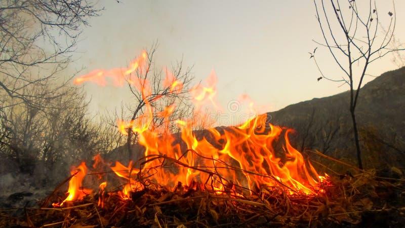 O fogo queima a cinza visível e o fumo das folhas secas Limpeza do outono foto de stock royalty free