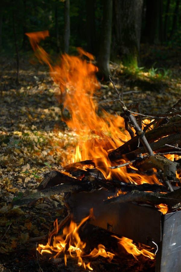 O fogo queima-se nas madeiras imagens de stock