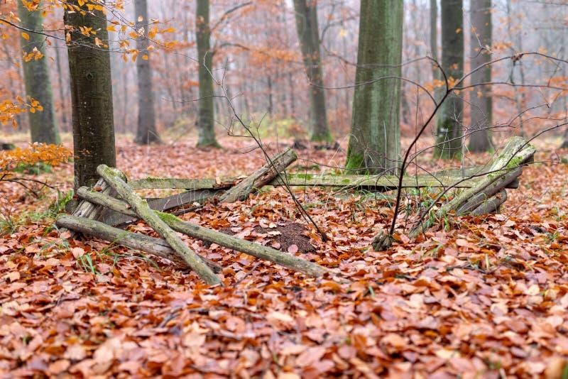 O formigueiro cercado com os Pegs de madeira velhos Cenário enevoado em um myst fotos de stock