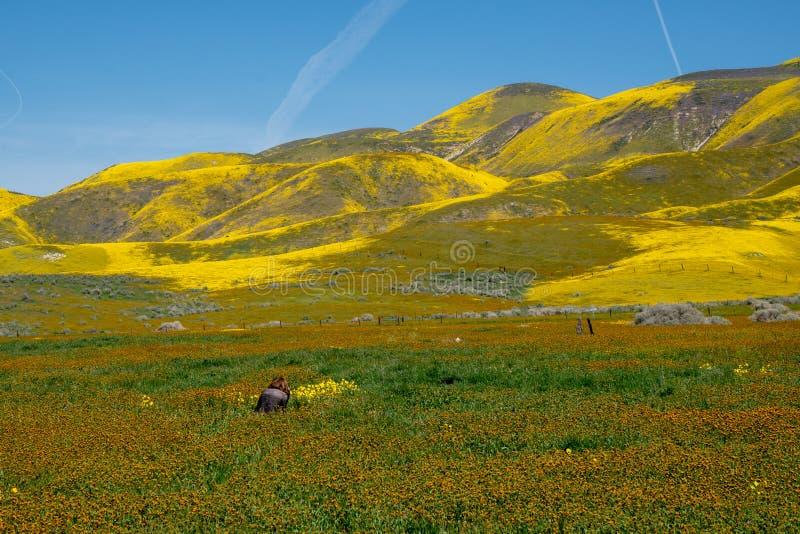 O fotógrafo da mulher toma fotos dos wildflowers no monumento nacional liso de Carrizo em Califórnia foto de stock