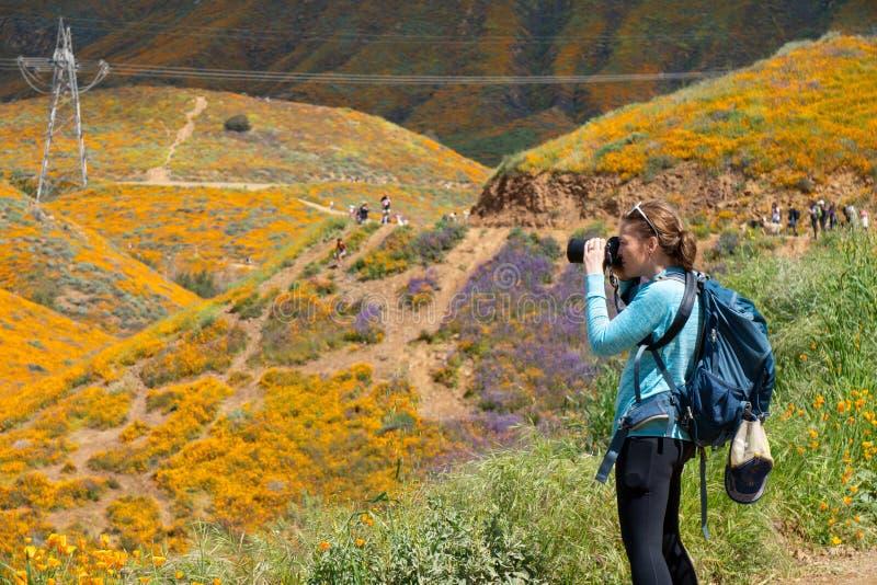 O fotógrafo da mulher toma fotos em Walker Canyon no lago Elsinore Califórnia durante o superbloom 2019 da papoila fotografia de stock