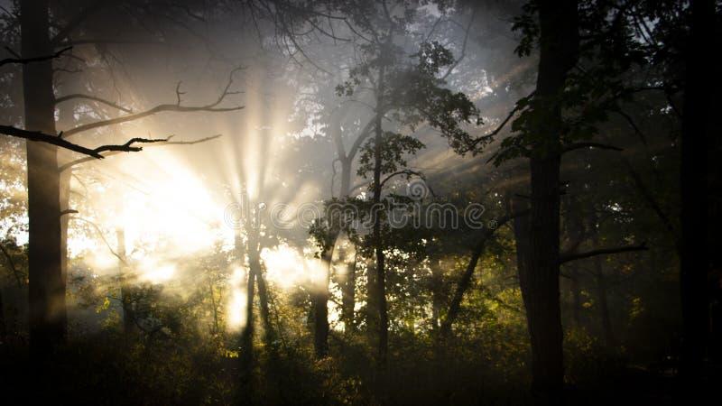O frescor da manhã em uma cara bonita do outono, um raio de luz do sol passa através dos ramos dos redays no alvorecer fotografia de stock