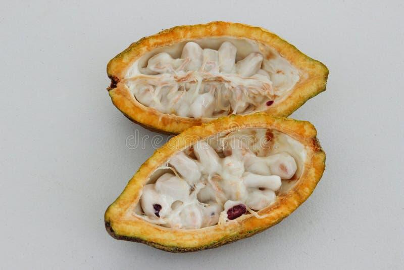 O fruto aberto do feijão de cacau fotografia de stock royalty free