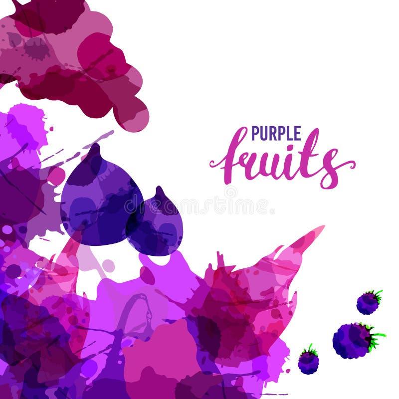 O fruto ajustou manchas da aquarela e manchas tiradas com uma amora-preta do pulverizador, uvas, figo, fruto do drag?o Vetor natu fotografia de stock royalty free