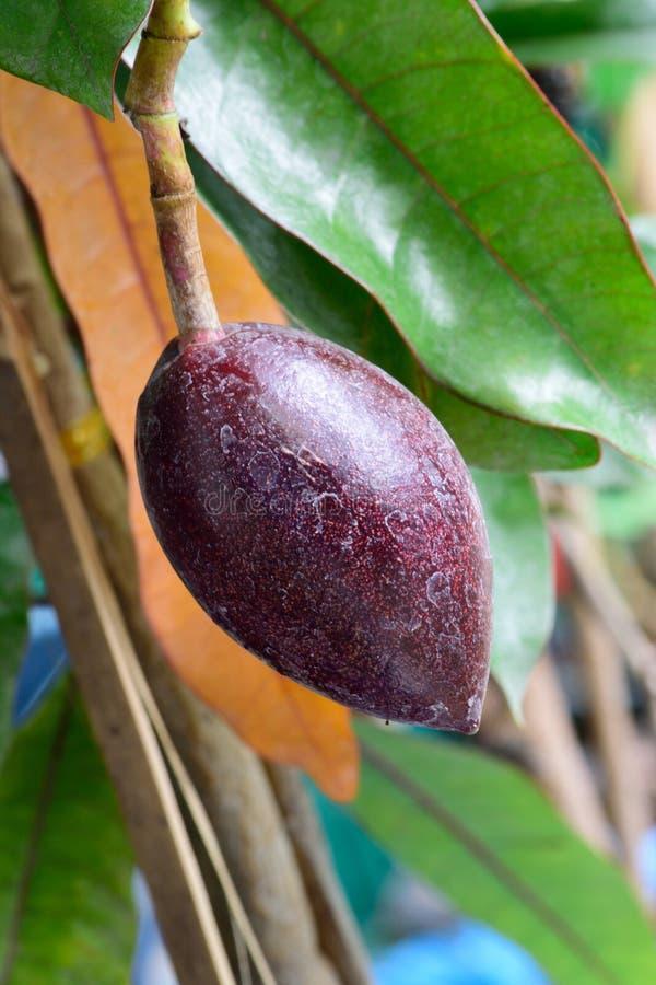 O fruto bonito fotos de stock royalty free