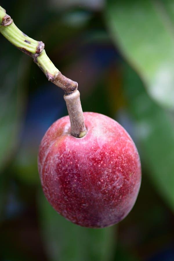 O fruto bonito fotos de stock