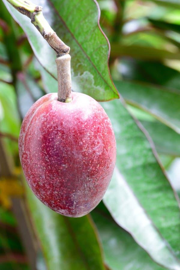 O fruto bonito foto de stock royalty free