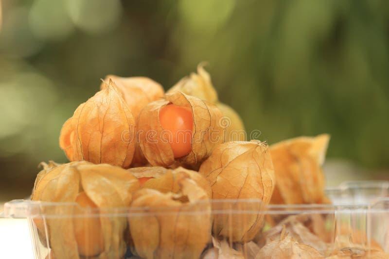 O fruto da groselha de cabo, outono marrom colhe no bokeh verde da mola imagem de stock