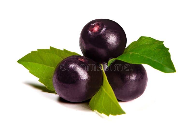 O fruto do acai de amazon fotografia de stock