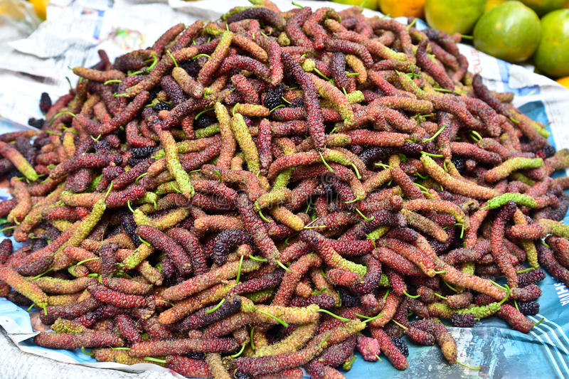 Mulberry indiano imagens de stock