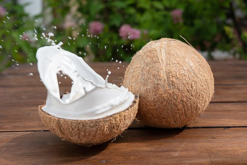 O fruto e o leite do coco espirram dentro dele em um fundo de um amigo imagem de stock
