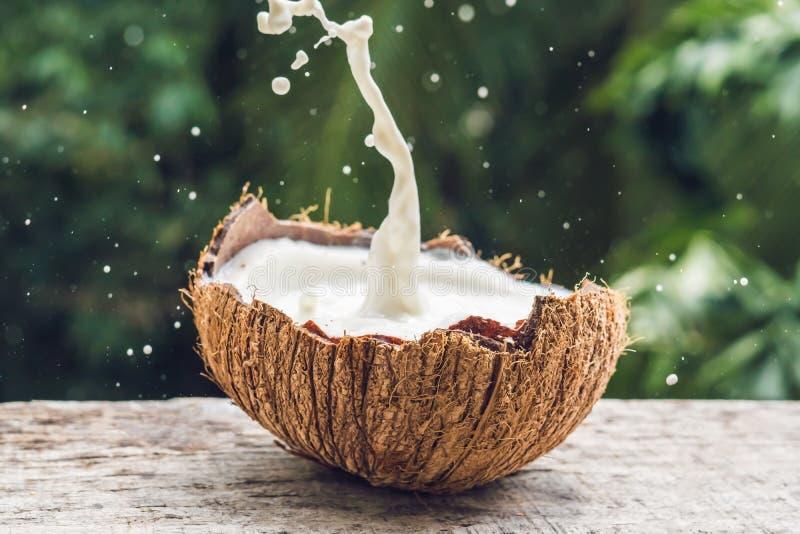 O fruto e o leite do coco espirram dentro dele em um fundo de uma palmeira imagem de stock royalty free