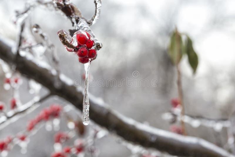 O fruto vermelho congelado imagens de stock