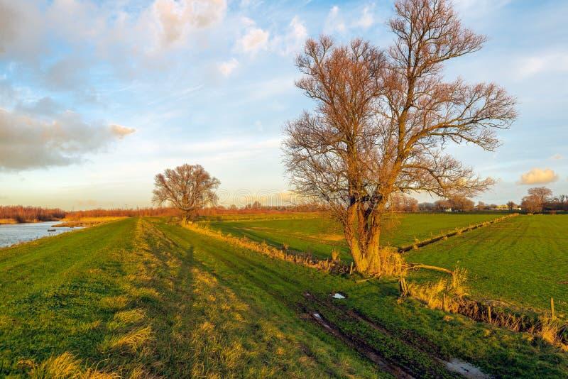 O fulgor dourado do sol de ajuste brilha sobre uma reserva natural foto de stock royalty free