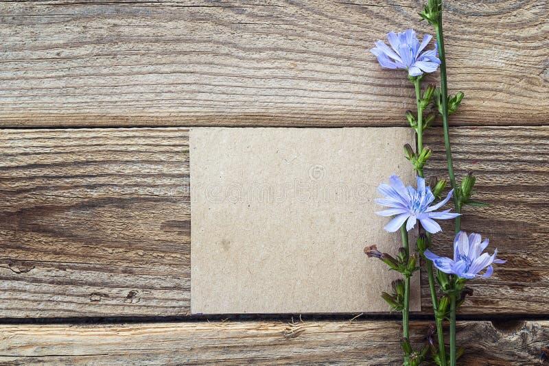 O fundo com cartão vazio e as flores da chicória no velho cortejam fotografia de stock royalty free