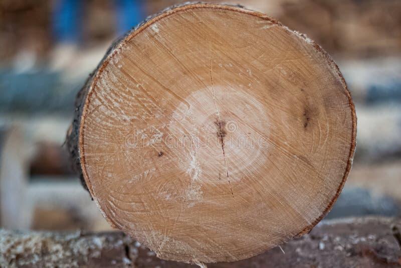 O fundo cortou a madeira, textura natural da madeira, eliminou a serra de cadeia imagens de stock