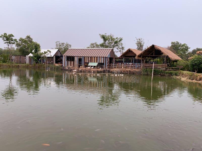 O fundo da exploração agrícola e da lagoa foto de stock