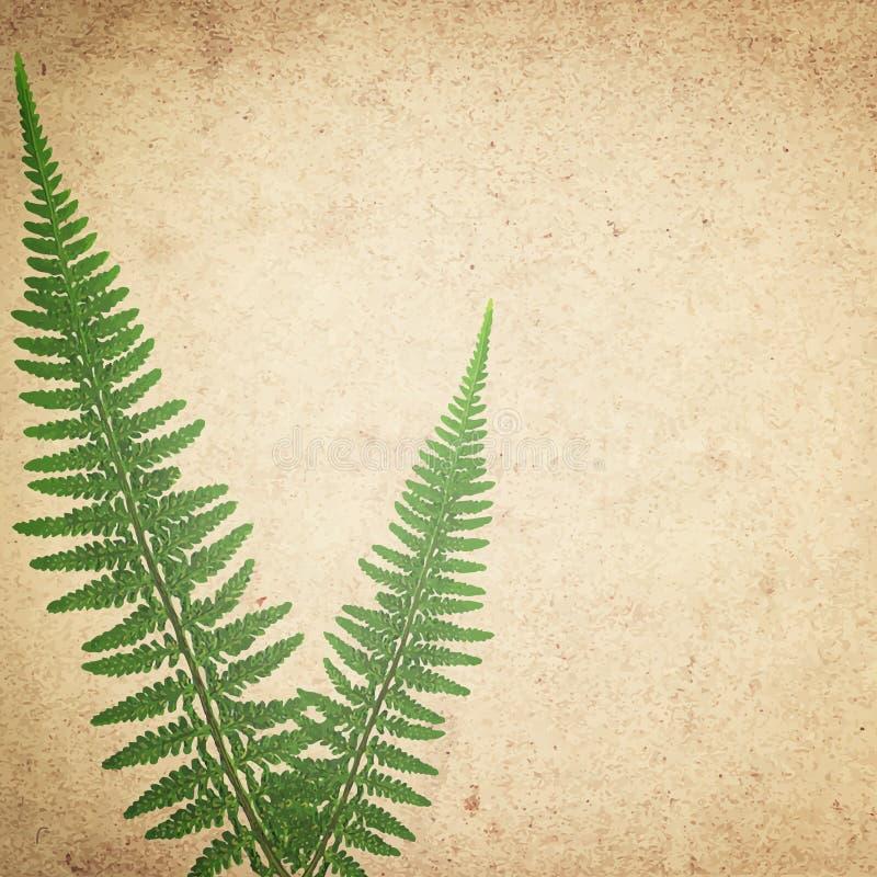 O fundo da textura do papel do vintage do Ld com a samambaia seca verde sae ilustração royalty free