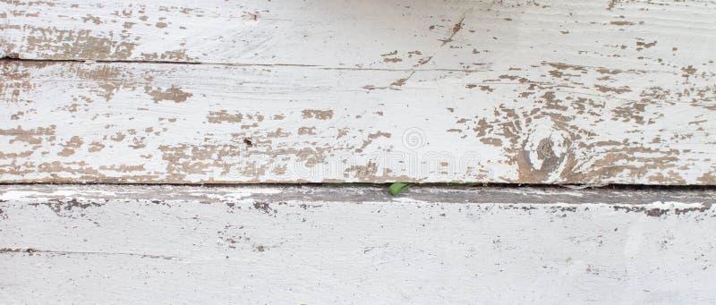 O fundo de madeira branco com pintura velha, racha-se, arrasta-se Espa?o sob o texto Coto velho na lavagem pol?tica imagens de stock royalty free