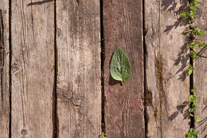 O fundo de madeira consiste em pranchas de madeira velhas A folha verde encontra-se nas placas imagens de stock