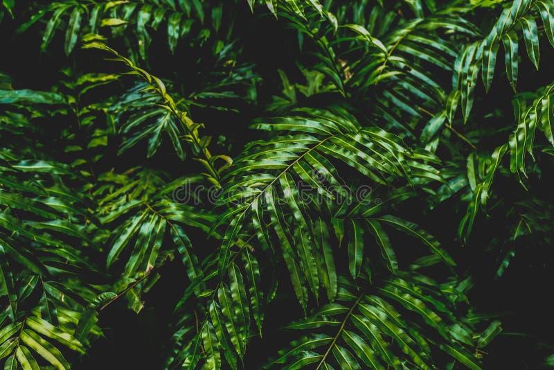 O fundo do conceito do contraste alto e a textura da samambaia da cor verde deixam o arbusto na floresta imagem de stock