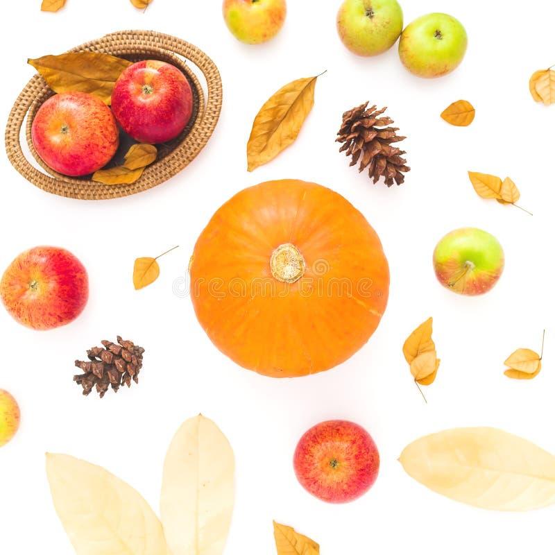 O fundo do outono da ação de graças feito da queda secou as folhas, os cones do pinho, as maçãs e a abóbora no fundo branco Confi imagens de stock royalty free