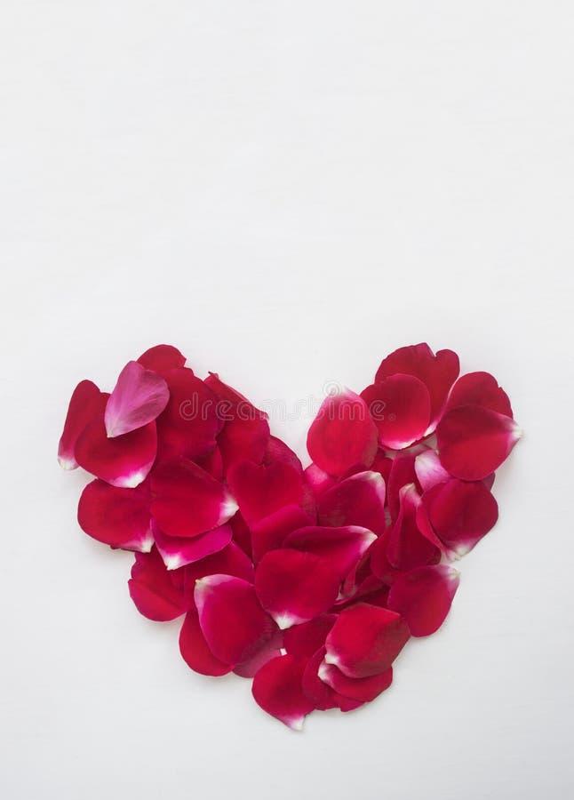 O fundo do rosa das pétalas cor-de-rosa em um fundo branco encontra-se delicadamente no coração imagem de stock