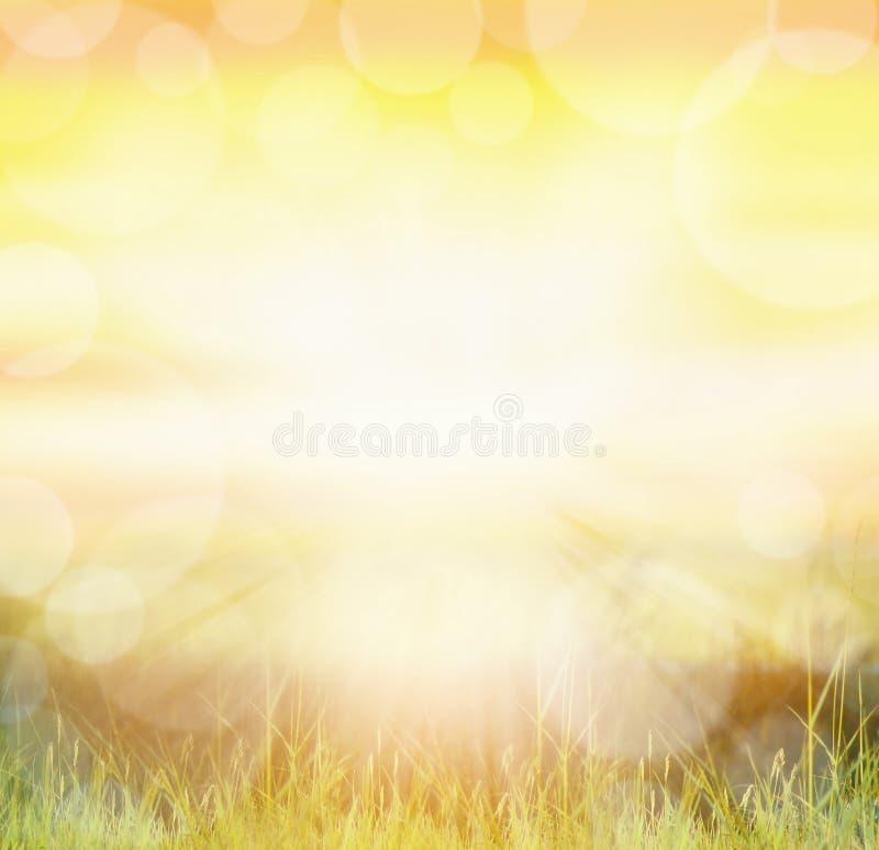 O fundo ensolarado do natur com bokeh e sol irradia na grama foto de stock royalty free