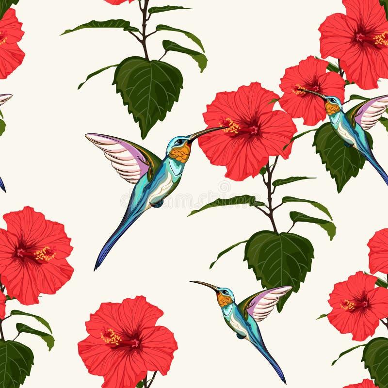O fundo floral do teste padrão do verão do vetor sem emenda bonito com colibri e o hibiscus vermelho floresce ilustração royalty free