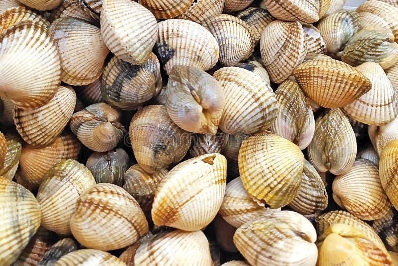 O fundo fresco dos moluscos, conchas do mar fecha-se acima, Espanha fotos de stock