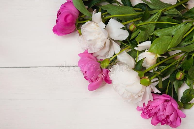 O fundo para o convite, felicitações com peônias floresce foto de stock