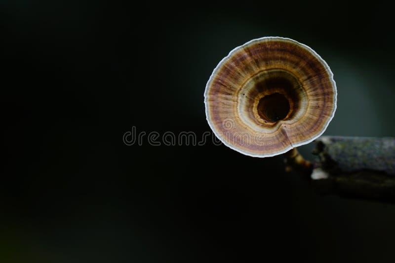 O fungo cresce na madeira na floresta foto de stock